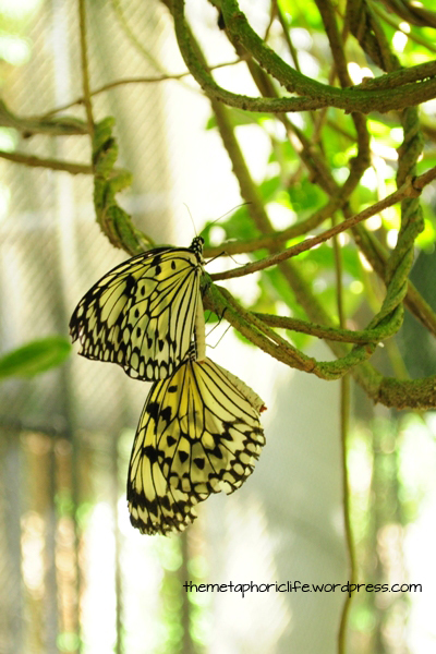 See the butterflies inside the butterfly house! Entrance is P10.