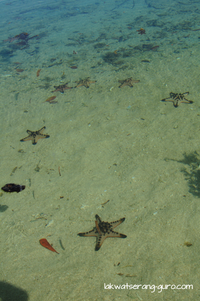 Starfish on Star Island