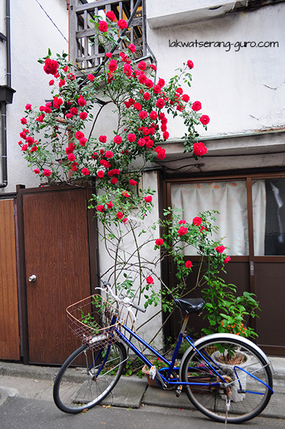 We were just walking back to Asakusa when we saw this little spot of beauty.
