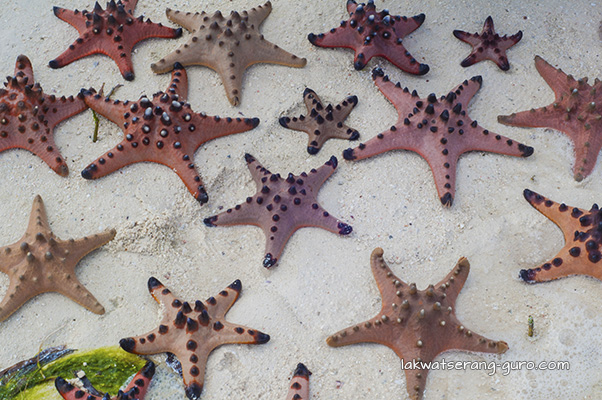 Chocolate-chip starfish!