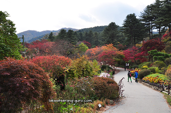 Garden of Morning Calm in Gyeonggi-do